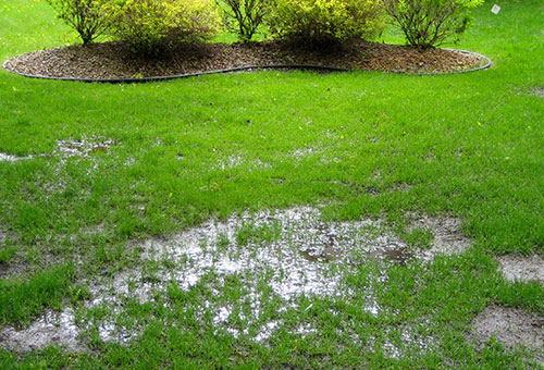 solve-your-wet-yard-drainage-issues.jpg